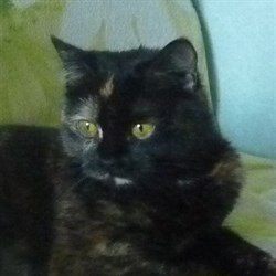 Кошка ШЕБА - фото 5324