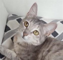 Кошка АЛИСА - фото 5384