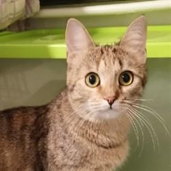 Кошка ФИОНА - фото 5445