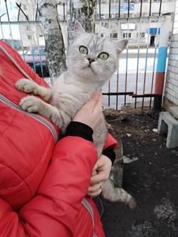 Кошка в Чердаклах - фото 5485