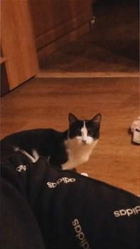 Кот на Тюленева - фото 5497
