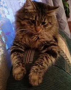 Кот у Телецентра - фото 5504