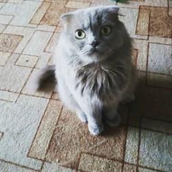 Кошка на Лен. Ком 9 - фото 5508