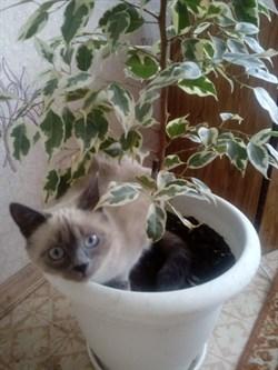 Кошка Жужа на Солнечной - фото 5517