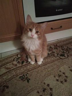 Рыжий кот на Александровской - фото 5523