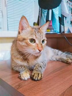 Кошка Василиса на Октябрьской - фото 5527