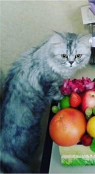 Кот британец на К. Маркса - фото 5532