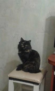Кошка Джесси на Железнодорожной - фото 5552