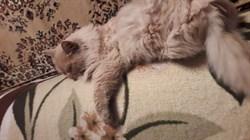 Кот рыжий на нижнеполевой - фото 5579