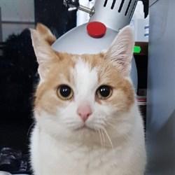 Кошка САННИ - фото 5619