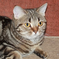 Кошка МУРОЧКА - фото 5653