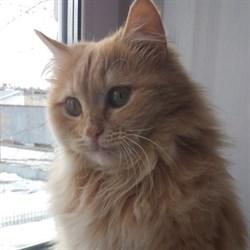 Кошка АЛИСА - фото 5663