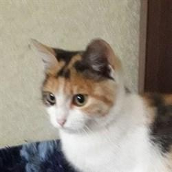Кошка ЗВЕЗДОЧКА - фото 5702
