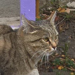 Кошка ВОРЧУНЬЯ - фото 5710