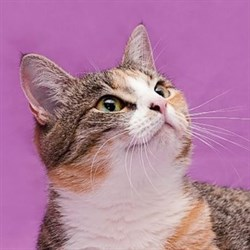 Кошка КРАСОТКА - фото 5751