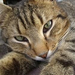 Кошка МУРА - фото 5770