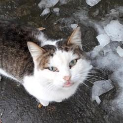 Кот ИВАНУШКА - фото 5778