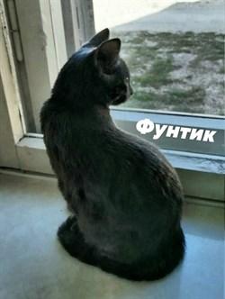 Кот Фунтик на Б. Хмельницкого - фото 5808