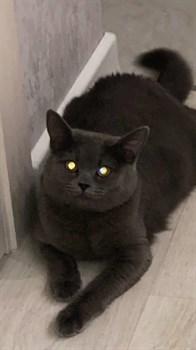 Кошка ЭММИ мкр. Искра - фото 5829