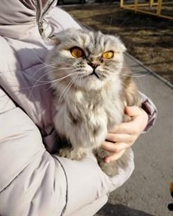 Кошка экзот на Юго-западе - фото 5830