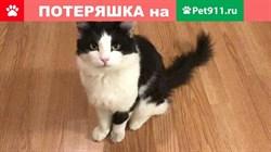 Кот на Буинской - фото 5840