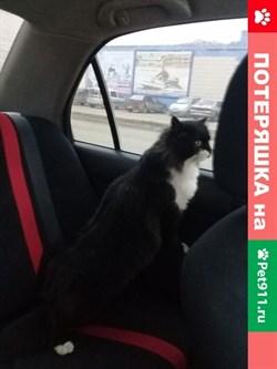 Кошка на Промышленной - фото 5842