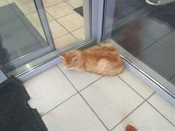 Кот на Шевцовой - фото 5860