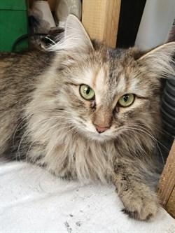 Кошка МУСЯ - фото 5889