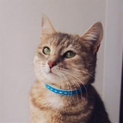 Кошка ЛЕРОЧКА - фото 5955
