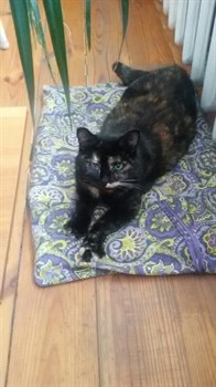 Кошка Лиза в Винновке - фото 5964
