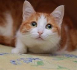 Кошка РУФИНА - фото 5979