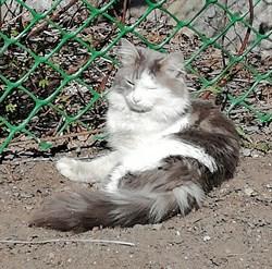Кот Пушок - фото 6087