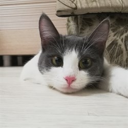 Кошка ЯСЯ - фото 6093