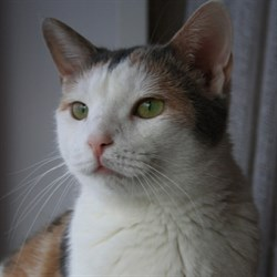 Кошка ЛАПКА - фото 6183