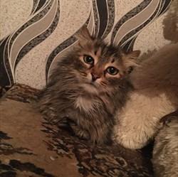 Кошка МИЛАШКА - фото 6208