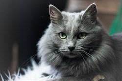 Кошка на Новосондецком 18 - фото 6246