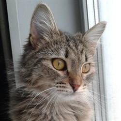 Кошка ПУША - фото 6285