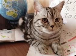 Кот Гучи на Верхней - фото 6302