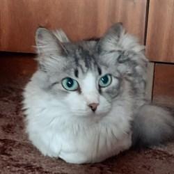 Кошка АЛИСА - фото 6305