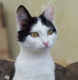 Кошка МАРИЦА - фото 6313