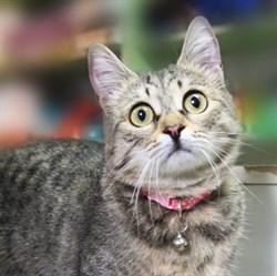 Кошка МИЛА - фото 6315