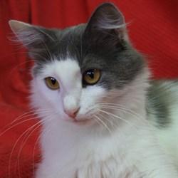 Кошка ПУШИНКА - фото 6323