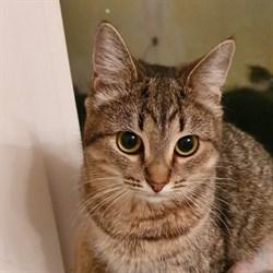 Кошка БУСЯ - фото 6343