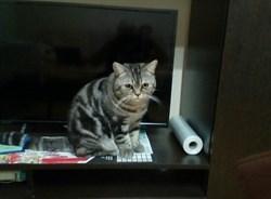 Кот Стив на Некрасова - фото 6392