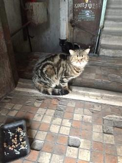 Кошка на Варейкиса - фото 6420