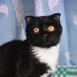 Кошка СОВА - фото 6482