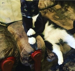 Кот на Стасова - фото 6502