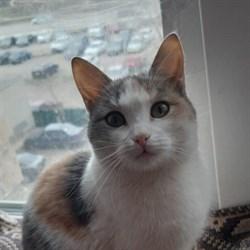 Кошка ВИККИ - фото 6512