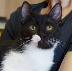 Кошка МЭРИ - фото 6517