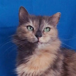 Кошка АГАТА - фото 6582